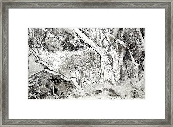 Charcoal Copse Framed Print