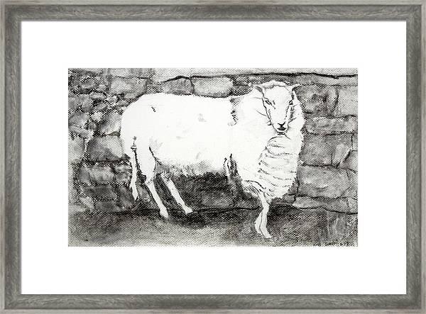 Charcoal Sheep Framed Print