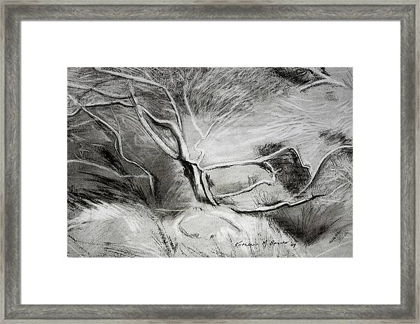 Charcoal Tree Framed Print