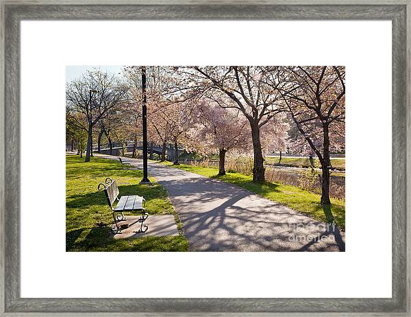 Framed Print featuring the photograph Charles River Cherry Trees by Susan Cole Kelly