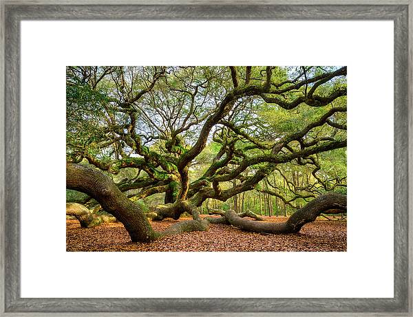 Charleston Sc Angel Oak Tree South Carolina Landscape Framed Print