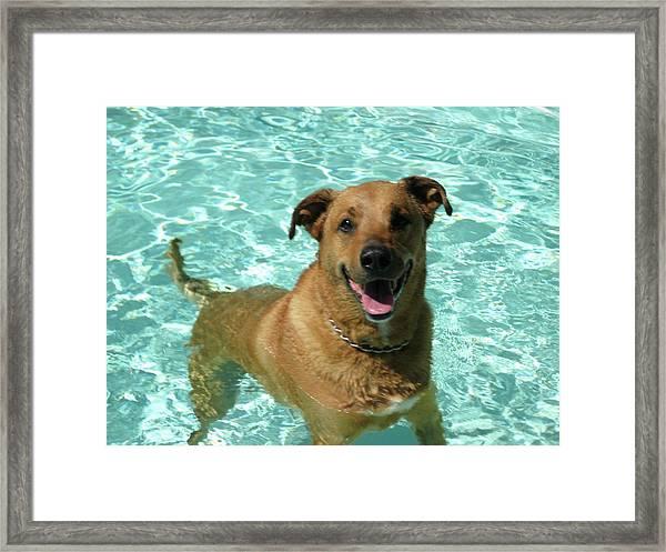 Charlie In Pool Framed Print by Rebecca Wood