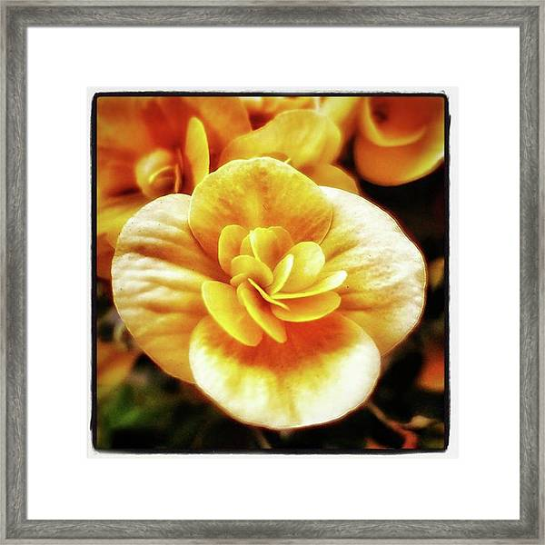 Charlie's Begonias. He Grows Them On Framed Print by Mr Photojimsf