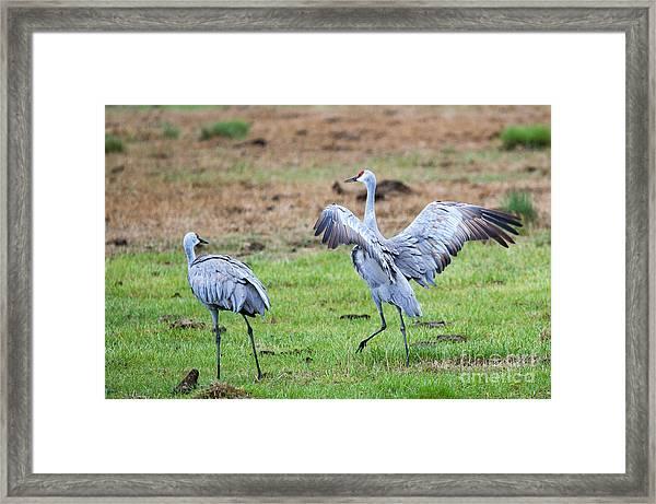 Check The Moves Framed Print