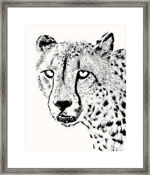 Cheetah Close-up Framed Print