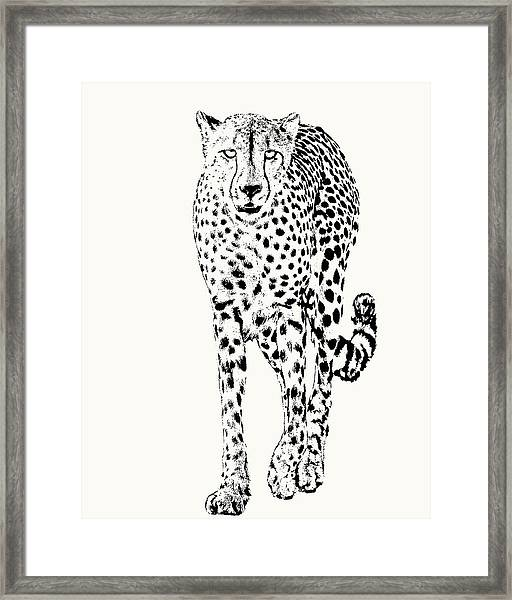 Cheetah Full Figure, Front-on View Framed Print