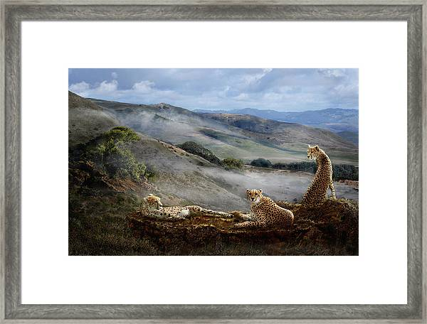 Cheetah Ridge Framed Print