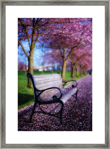 Cherry Blossom Bench Framed Print