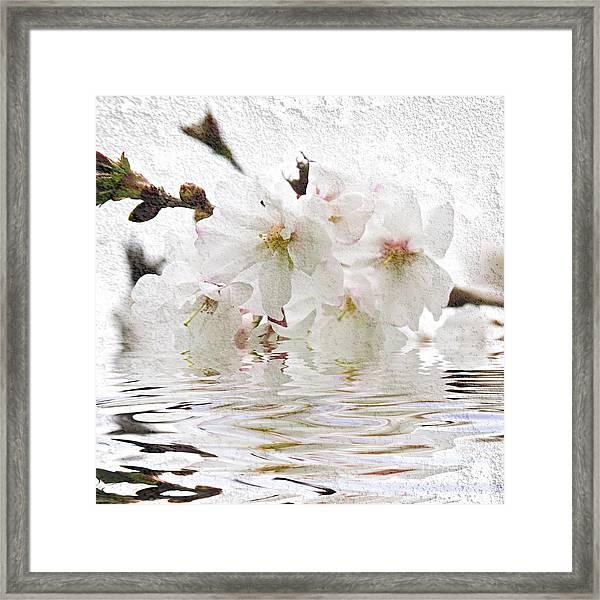 Cherry Blossom In Water Framed Print