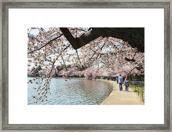 Cherry Blossom Stroll Around The Tidal Basin Framed Print