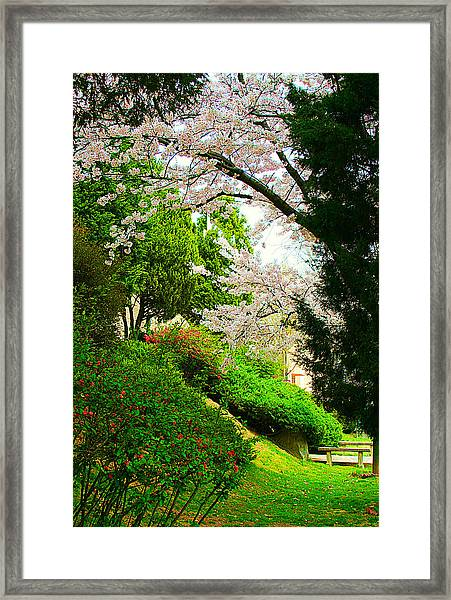 Cherry Blossom Time Framed Print by Michael C Crane