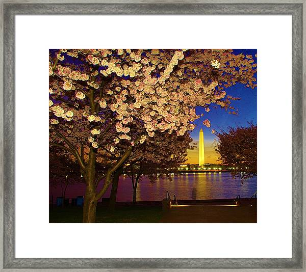 Cherry Blossom Washington Monument Framed Print