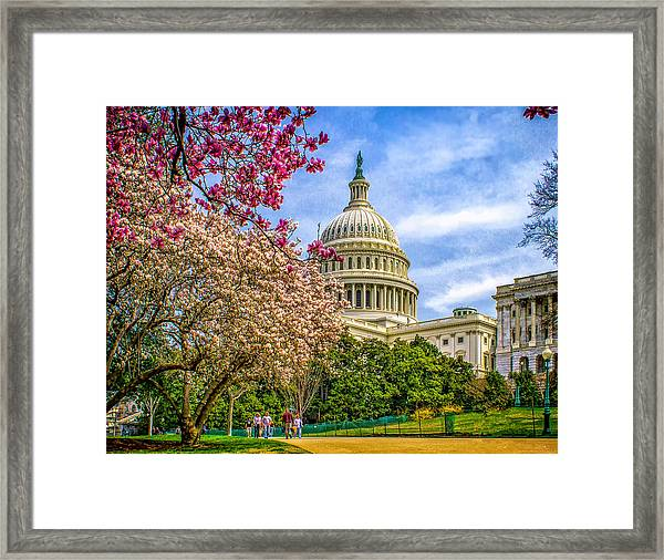 Cherry Blossoms At The Capitol Framed Print