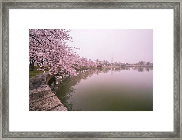 Cherry Blossoms In Fog Framed Print by Michael Donahue