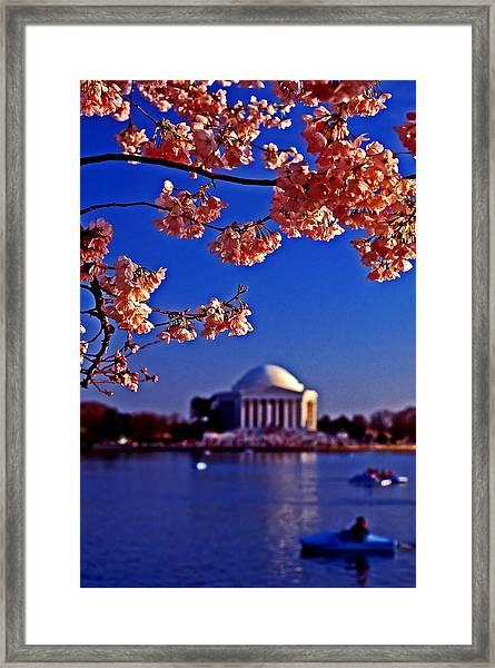Cherry Blossoms On The Tidal Basin Framed Print