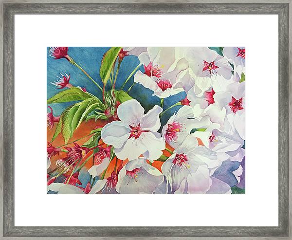 Cherry Blossomsa Framed Print