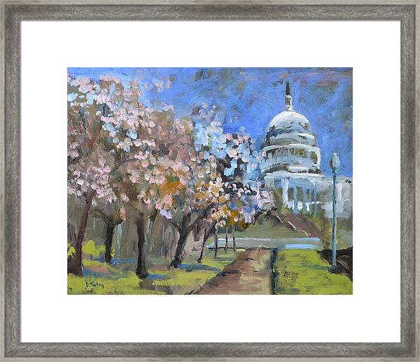 Cherry Tree Blossoms In Washington Dc Framed Print