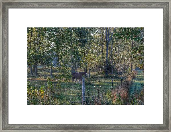 1009 - Chestnut Horse Among The Trees Framed Print