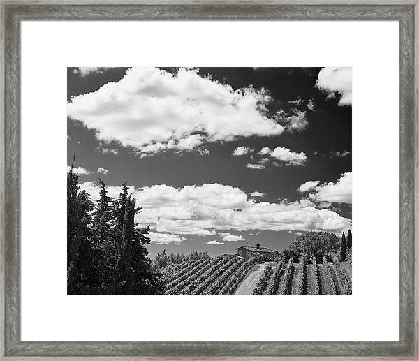 Chianti Vineyards Framed Print