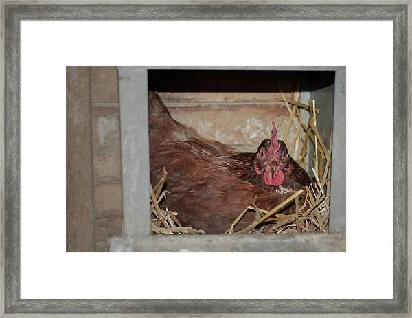 Chicken Box Framed Print