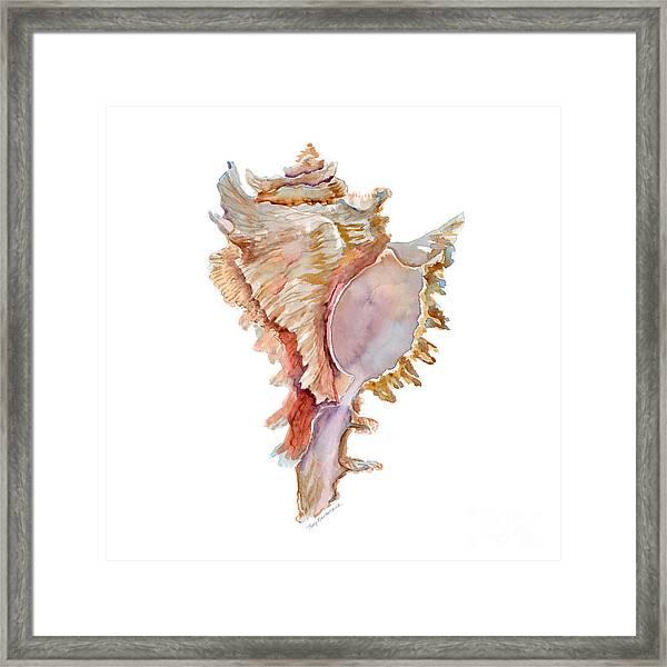 Chicoreus Ramosus Shell Framed Print