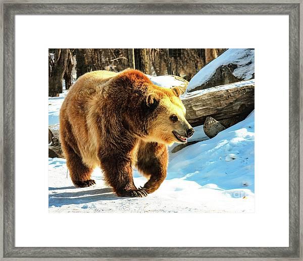 Chief Walking Bear Framed Print