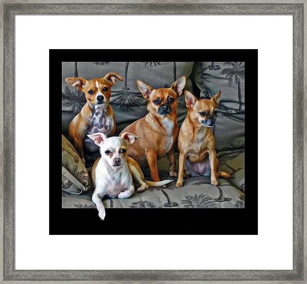 Chihuahuas Hanging Out Framed Print
