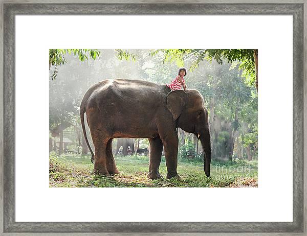 Child Girl Riding On Baby Elephant Framed Print