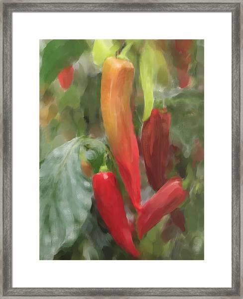 Chili Peppers Framed Print