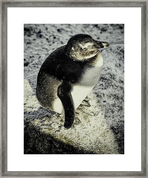 Chillypenguin Framed Print