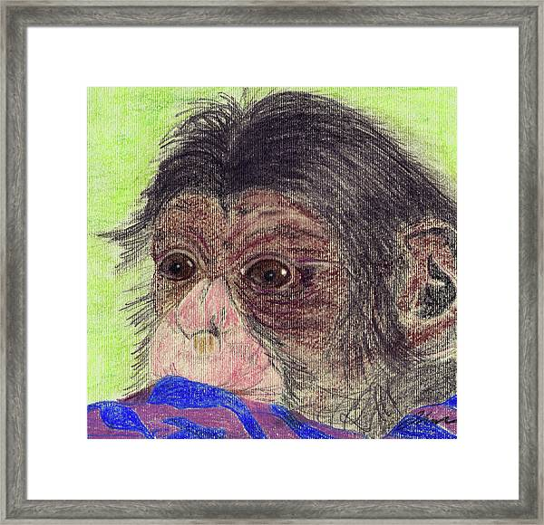 Chimp With Blanket Framed Print