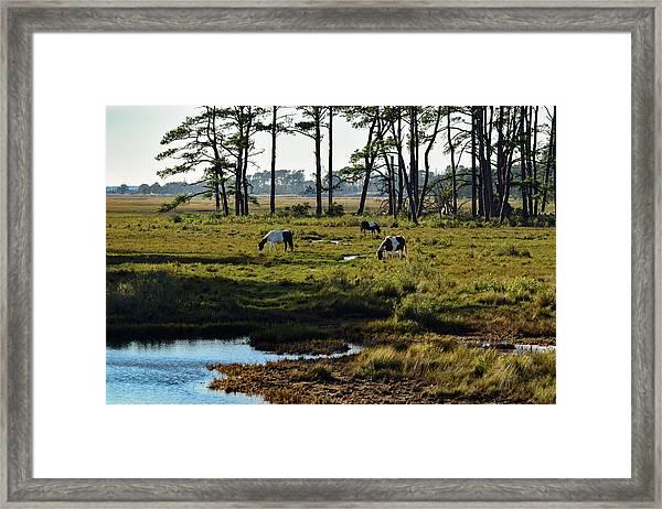 Chincoteague Ponies Framed Print
