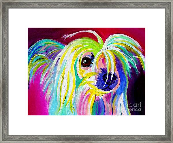Chinese Crested - Fancy Pants Framed Print