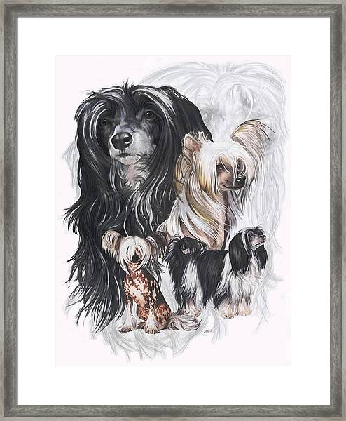 Chinese Crested And Powderpuff Medley Framed Print