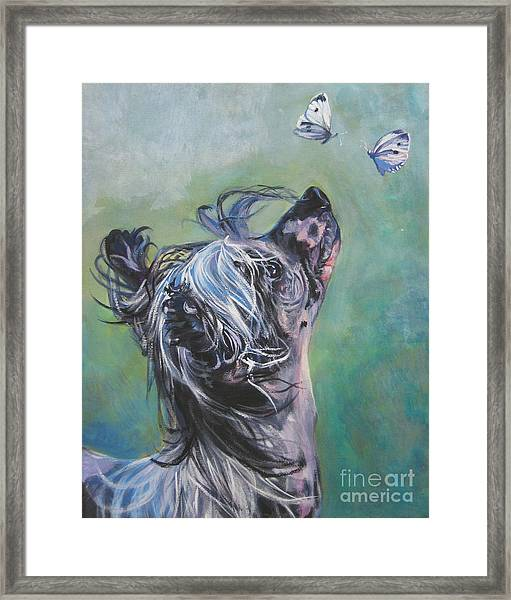 Chinese Crested With Butterflies Framed Print