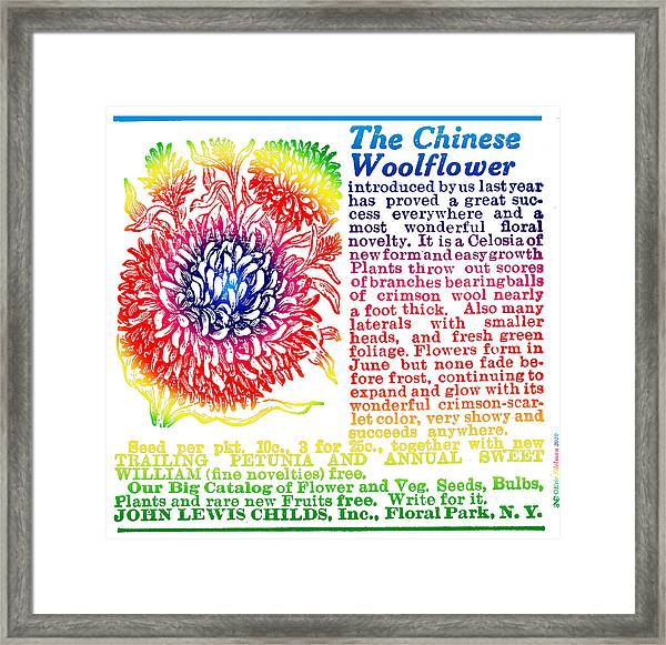 Chinese Woolflower Framed Print