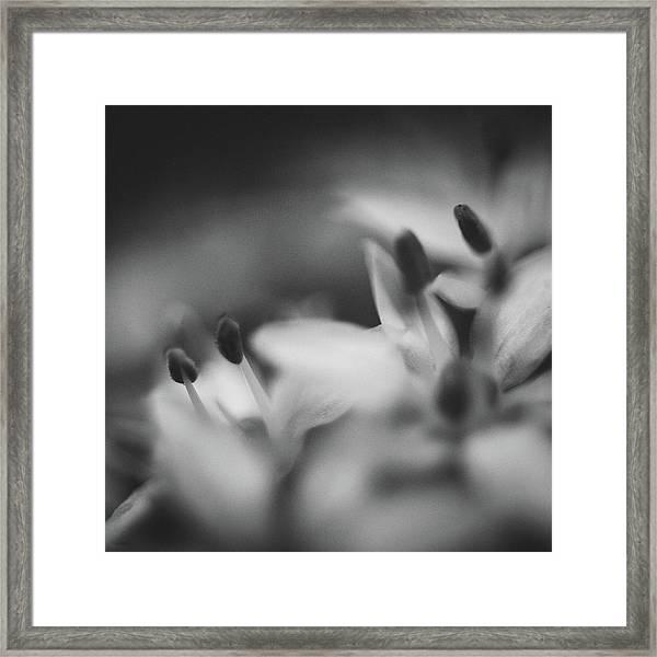 Chive I Framed Print