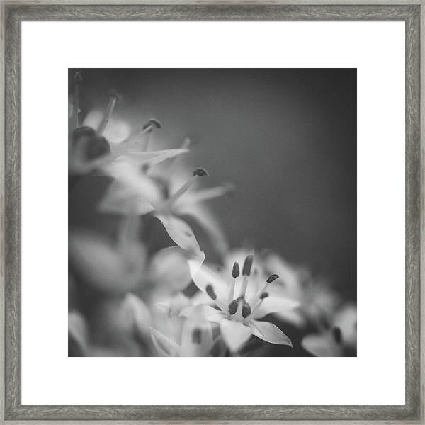 Chive IIi Framed Print