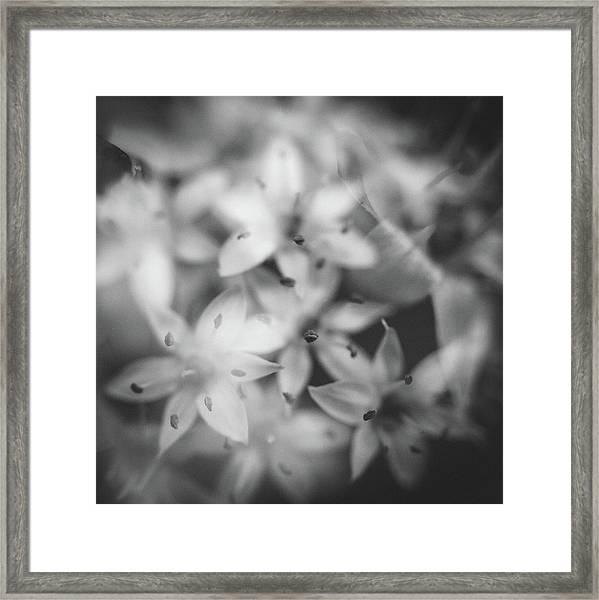 Chive Iv Framed Print
