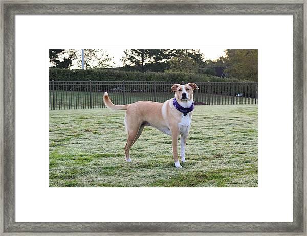 Chloe At The Dog Park Framed Print