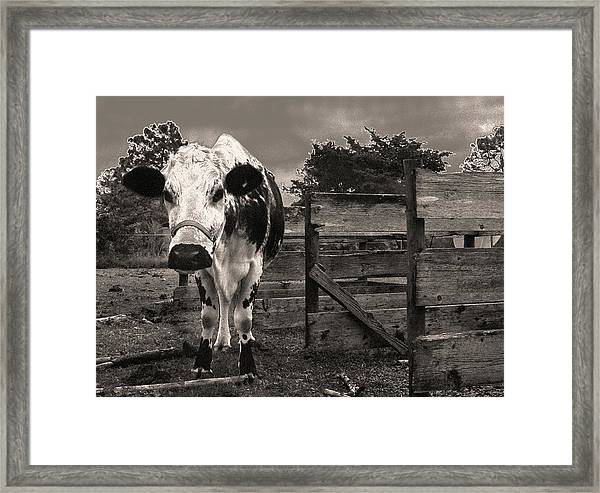Chocolate Chip At The Stables Framed Print