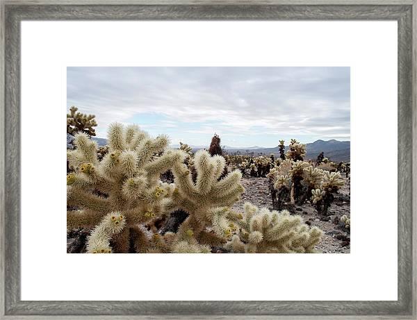 Cholla Cactus Garden Landscape II Framed Print