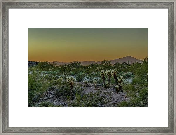 Cholla Desert Sunset Framed Print
