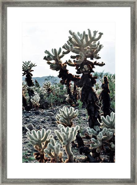 Cholla Teddy Bear Cactus Garden Portrait Framed Print