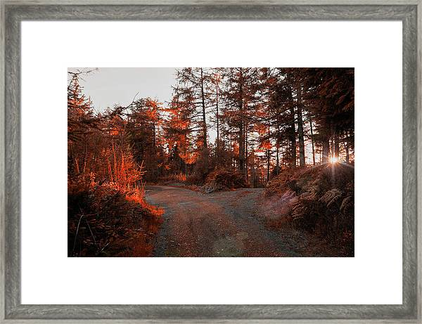 Choose The Road Less Travelled Framed Print
