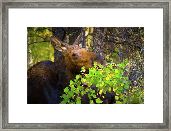 Framed Print featuring the photograph Chow Time by John De Bord