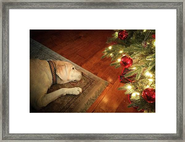 Christmas Dreams Framed Print