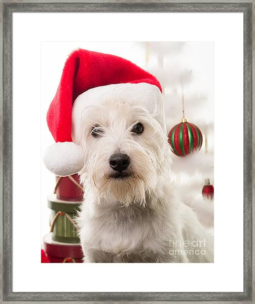 Christmas Elf Dog Framed Print