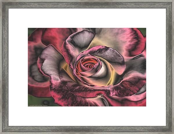 Chrome Rose 368 Framed Print