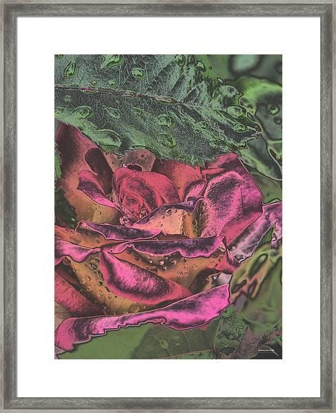 Chrome Rose 64182 Framed Print